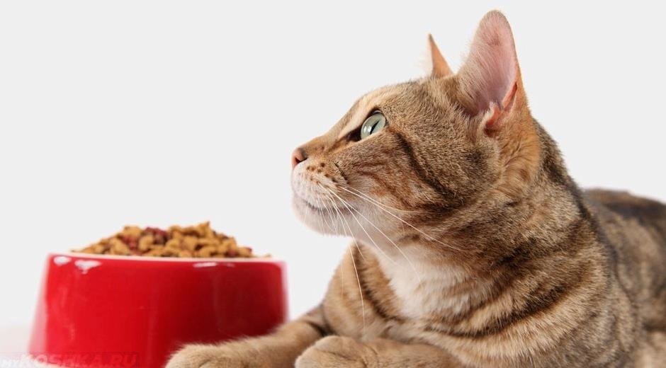 Royal Canin Obesity Management - Veterinary Diet